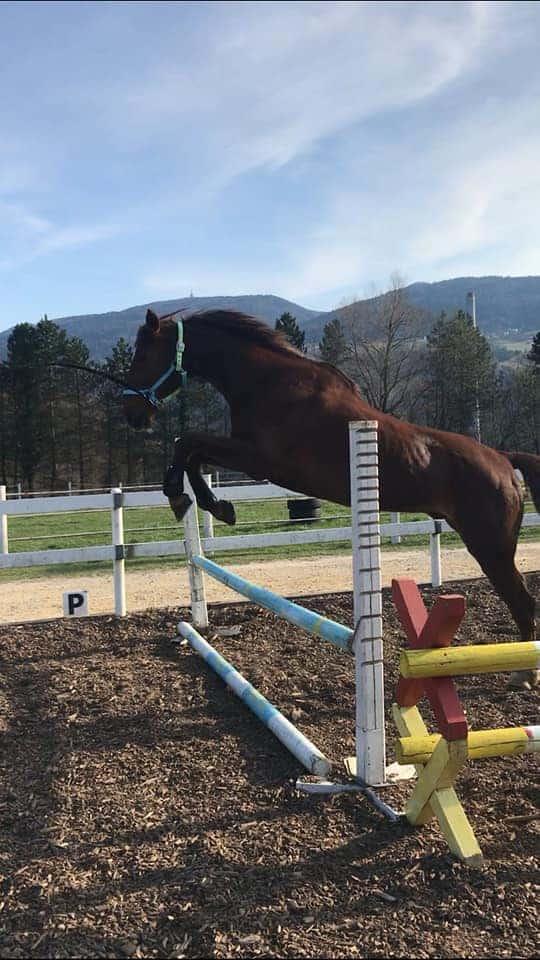konjeniško društvo